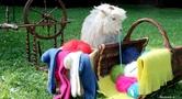 Produits en laine de chèvre angora